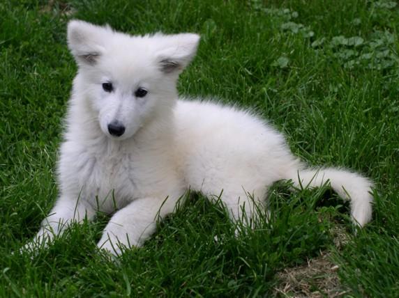 Mon amour pour les loups O3a4qrv1